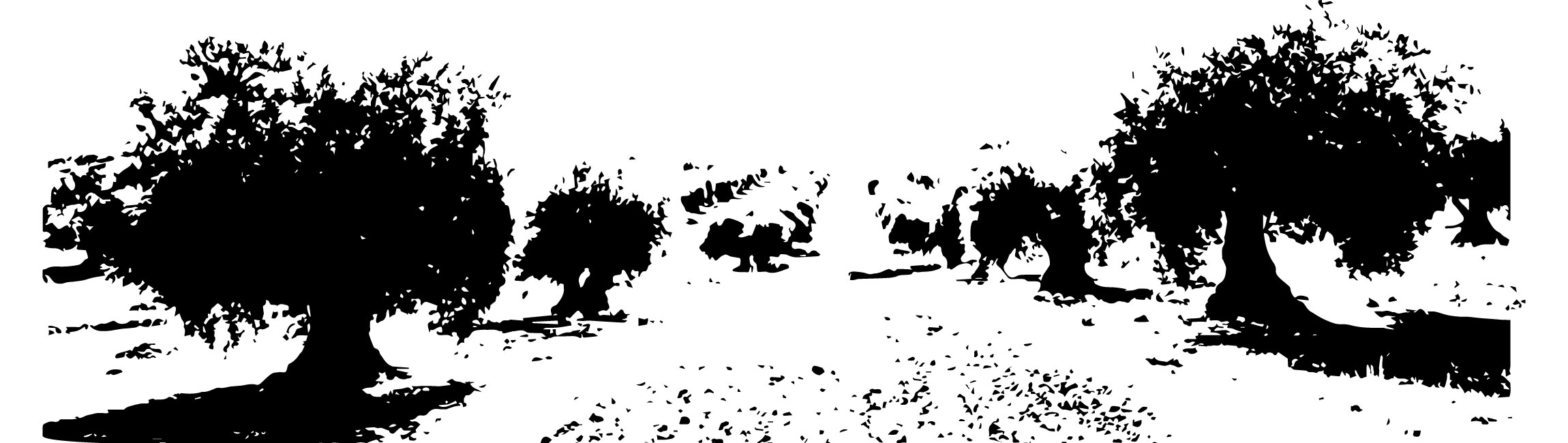 champ oliviers Le Moulin de mon Père