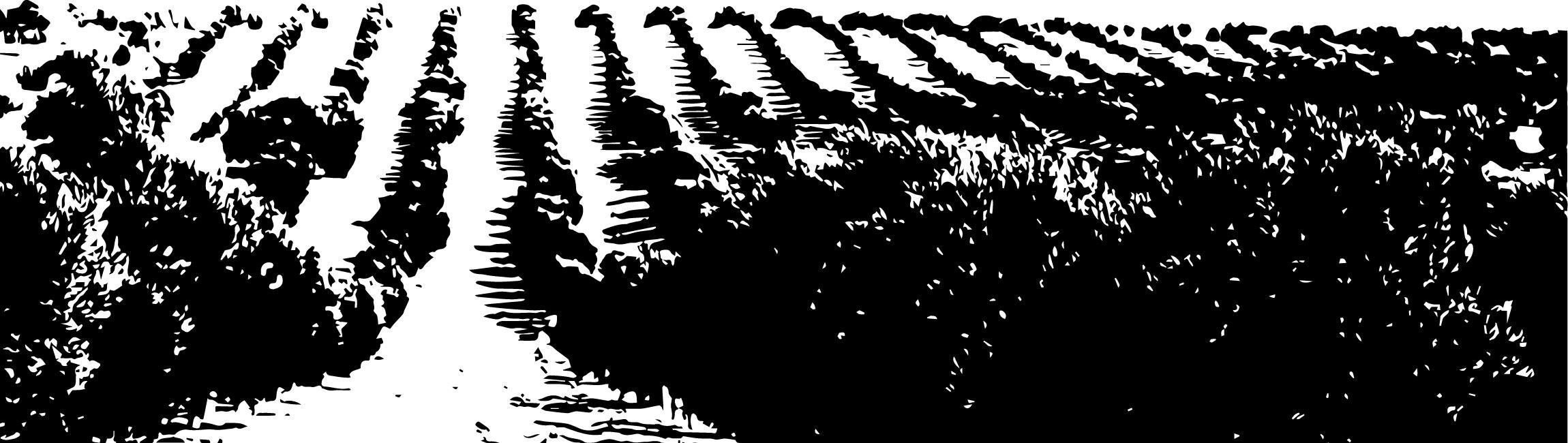 champ Provence Le Moulin de mon Père
